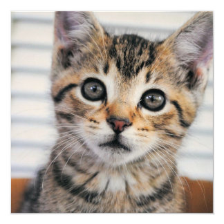Adorable Kitten Square Flat Cards