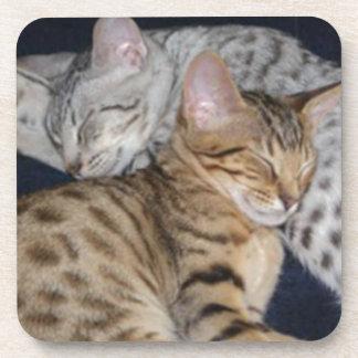 ADORABLE KITTENS BEVERAGE COASTER