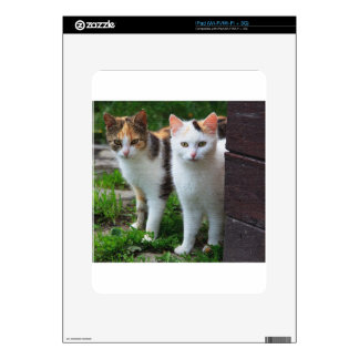 ADORABLE KITTENs Decal For The iPad