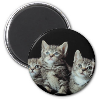 Adorable Kittens Refrigerator Magnets
