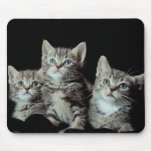 Adorable Kittens Mouse Pad