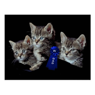 Adorable Kittens With Unbelievable Blue Eyes Postcard