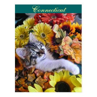 Adorable Kitty Cat Kitten leaning back, Flowers Postcard
