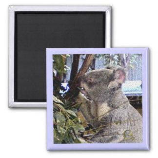 Adorable Koala 2 Inch Square Magnet