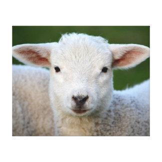 Adorable Lamb Canvas Print