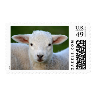 Adorable Lamb Postage