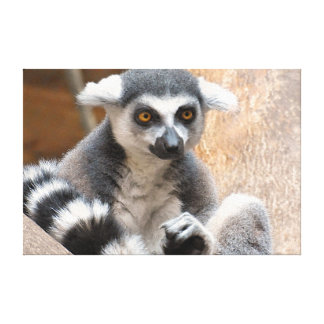 Adorable Lemur Gallery Wrapped Canvas