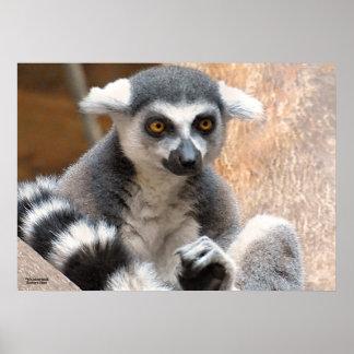 Adorable Lemur Print