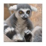 Adorable Lemur Tile