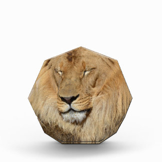 Adorable Lion Acrylic Award