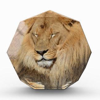 Adorable Lion Award