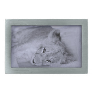 Adorable lion cub resting belt buckles