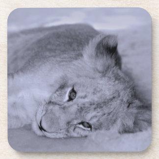 Adorable lion cub resting coaster