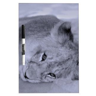Adorable lion cub resting Dry-Erase boards