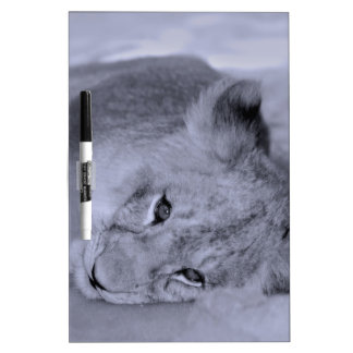 Adorable lion cub resting Dry-Erase whiteboard