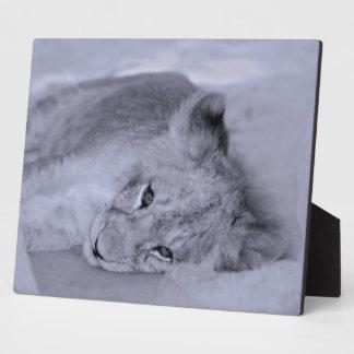 Adorable lion cub resting plaque