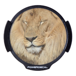 Adorable Lion LED Window Decal