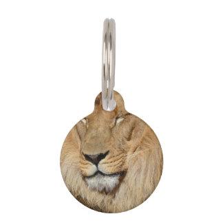 Adorable Lion Pet Name Tag