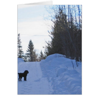 Adorable Little Dog Note Card