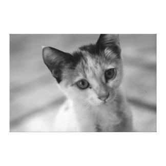 Adorable Little Kitten Canvas Print