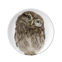 Adorable little owl wearing magnifying glass plate