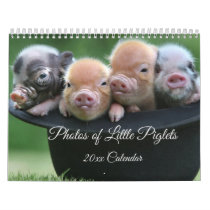 Adorable Little Piglets in a Black Hat Calendar