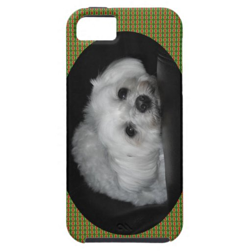Adorable Loving Maltese Christmas Puppy iPhone 5 Cases