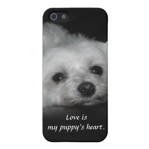 Adorable Loving Maltese Puppy Case For iPhone 5
