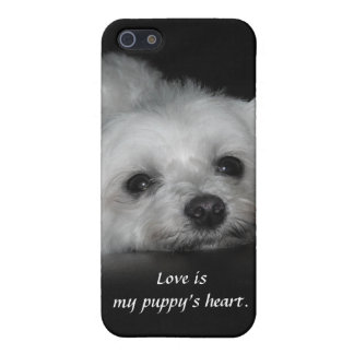 Adorable Loving Maltese Puppy iPhone SE/5/5s Cover