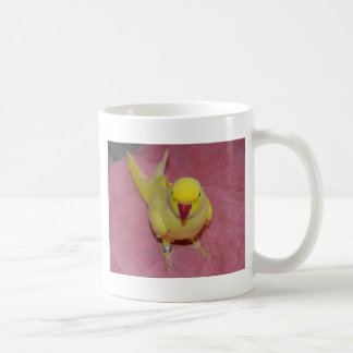 Adorable Lutino Indian Ringneck Parakeet on Pink Coffee Mug