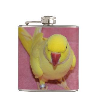 Adorable Lutino Indian Ringneck Parakeet on Pink Flask