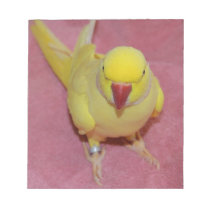 Adorable Lutino Indian Ringneck Parakeet on Pink Notepad