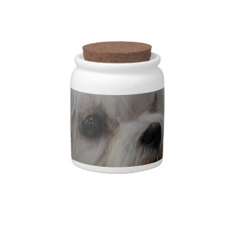 Adorable Maltese Candy Jars