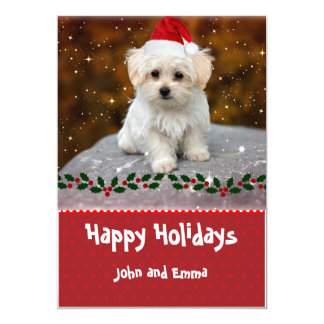 Adorable Maltese Puppy Template Holiday Card