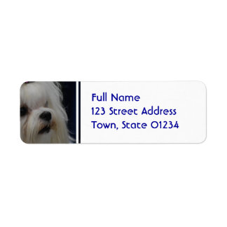 Adorable Maltese Return Address Label