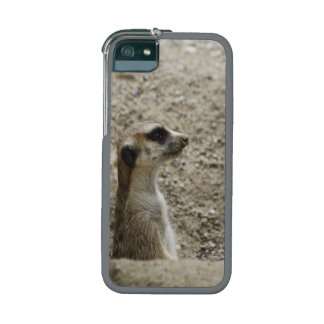 Adorable meerkat cover for iPhone 5