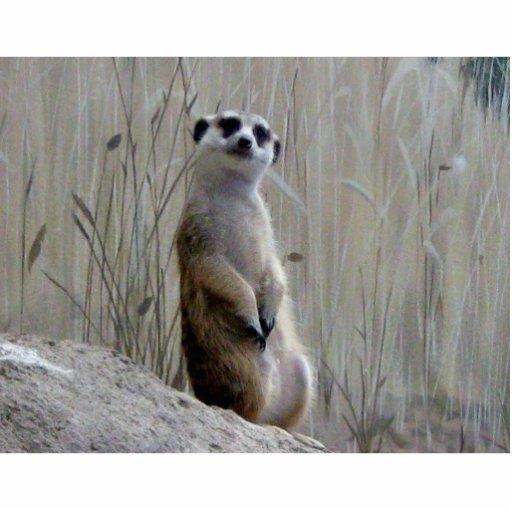 Adorable meerkat photo sculpture