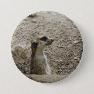 Adorable meerkat pinback button