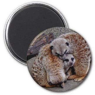 Adorable Meerkats Bundle of Fur Nature Photo Magnet