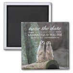 Adorable Meerkats Save The Date 2 Inch Square Magnet