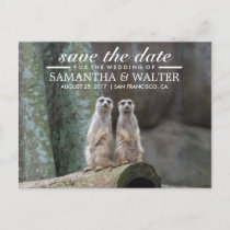 Adorable Meerkats Save The Date Announcement Postcard