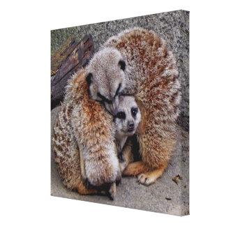 Adorable Meerkats Sleeping Ball of Fur Photo Canvas Print