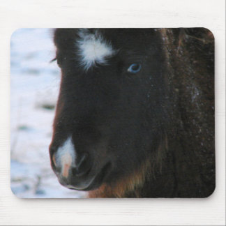 Adorable Mini Horse Filly Mouse Pad