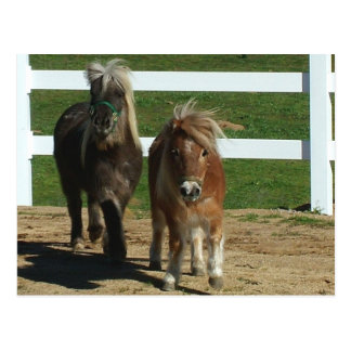 Adorable Miniature Horse Postcard