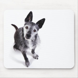 adorable mixed breed dog looking up mouse pad