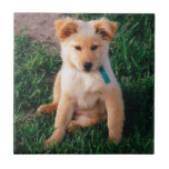 Adorable Mixed Breed Puppy Ceramic Tiles