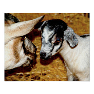 Adorable Mom and Baby Goat Poster
