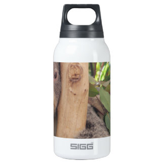 Adorable Mother and Baby Koala Insulated Water Bottle