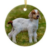 Adorable Newborn Boer Goat Kid Ceramic Ornament