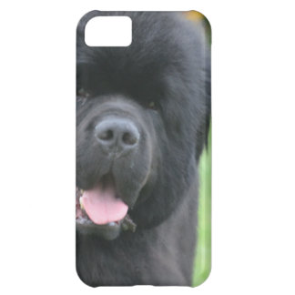Adorable Newfoundland Case For iPhone 5C